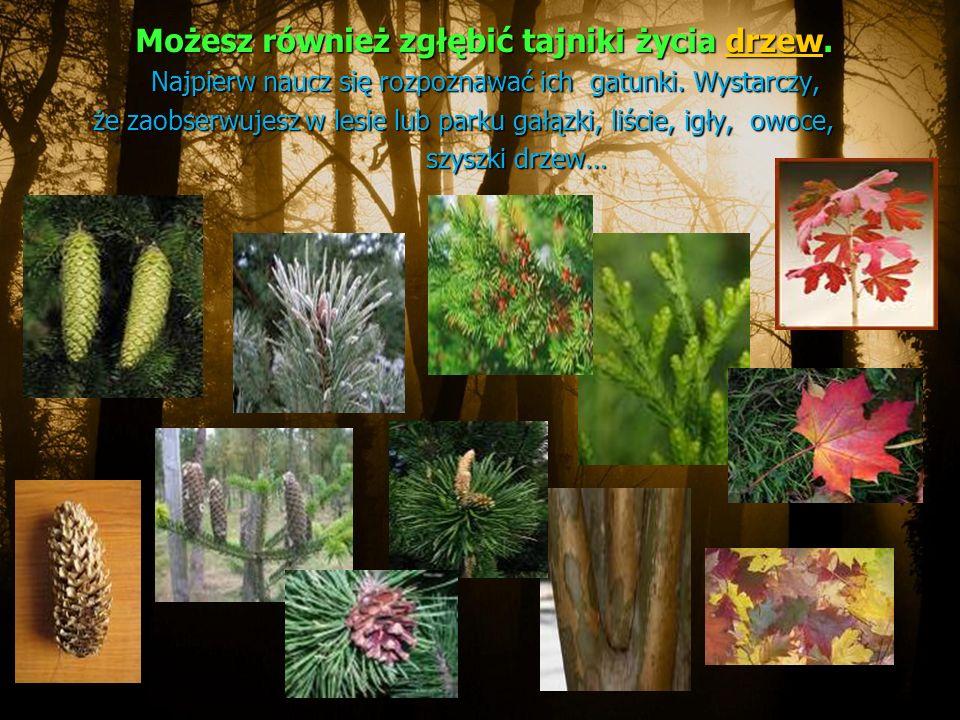 Możesz również zgłębić tajniki życia drzew.