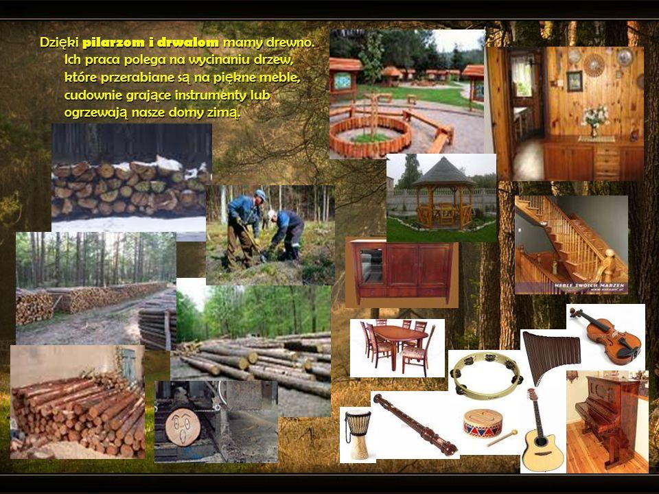 Dzięki pilarzom i drwalom mamy drewno