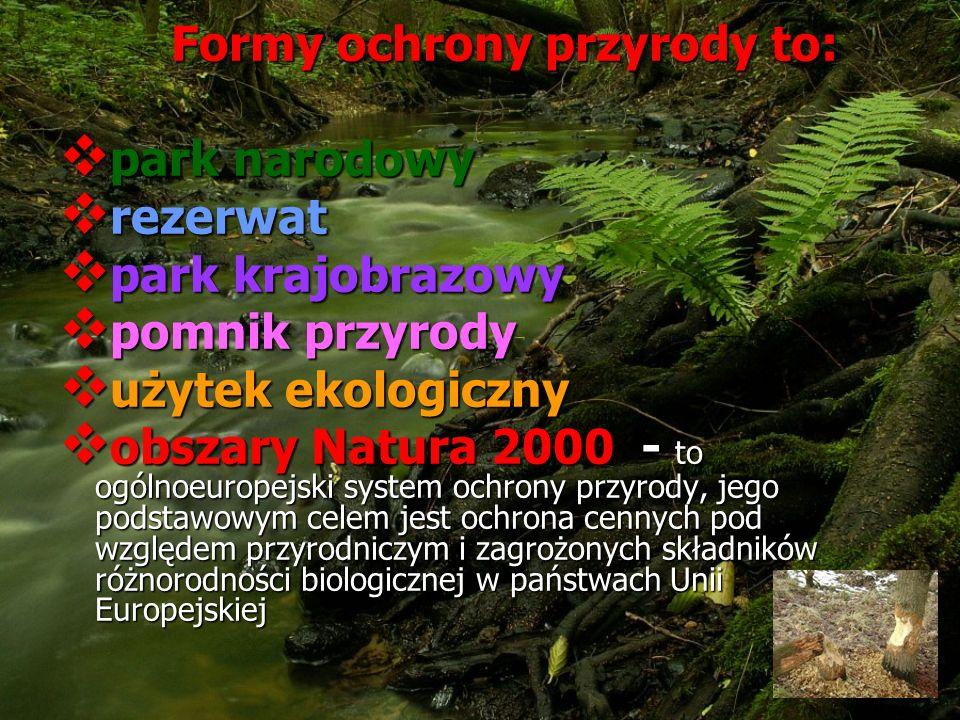 Formy ochrony przyrody to:
