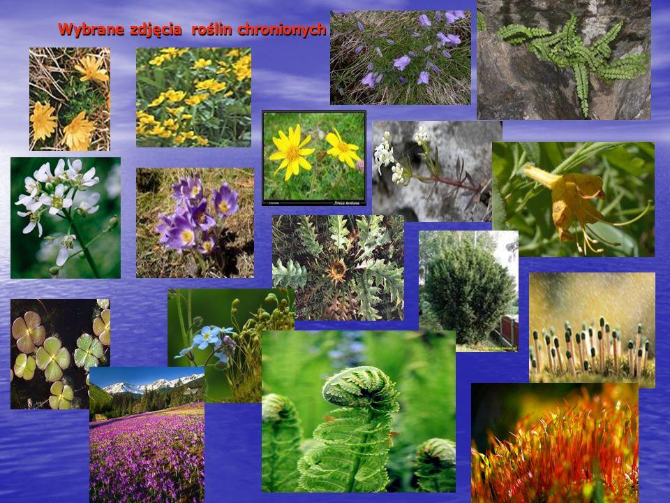 Wybrane zdjęcia roślin chronionych