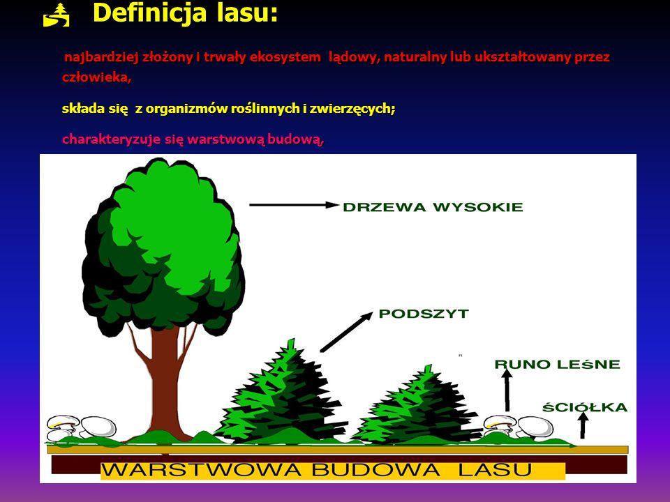 Definicja lasu: najbardziej złożony i trwały ekosystem lądowy, naturalny lub ukształtowany przez człowieka, składa się z organizmów roślinnych i zwierzęcych; charakteryzuje się warstwową budową,