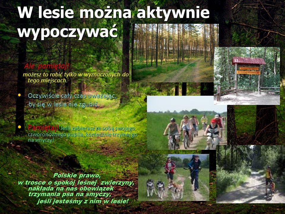 W lesie można aktywnie wypoczywać