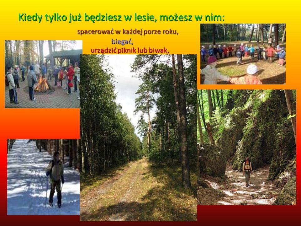 Kiedy tylko już będziesz w lesie, możesz w nim: spacerować w każdej porze roku, biegać, urządzić piknik lub biwak,