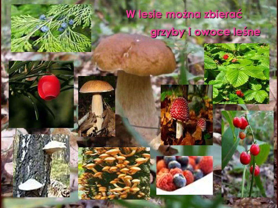 W lesie można zbierać grzyby i owoce leśne