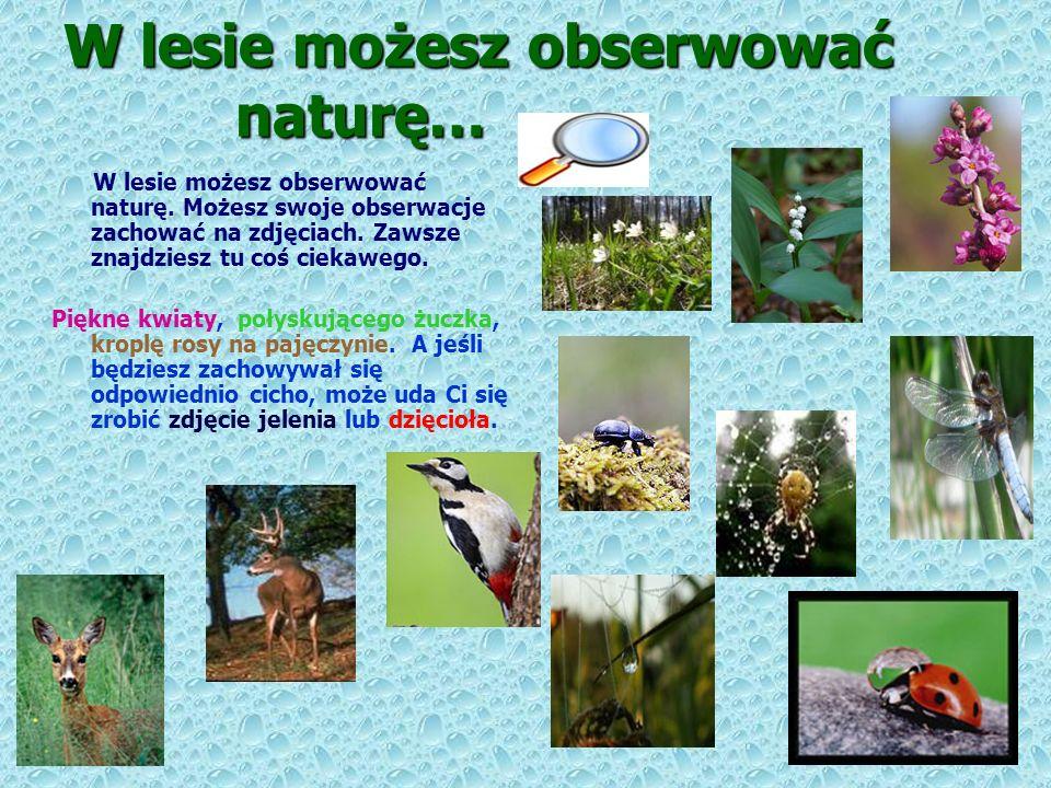 W lesie możesz obserwować naturę…