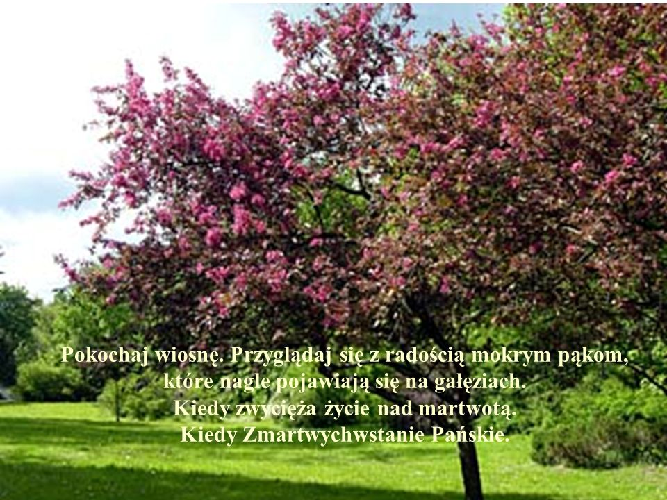 Pokochaj wiosnę. Przyglądaj się z radością mokrym pąkom, które nagle pojawiają się na gałęziach.