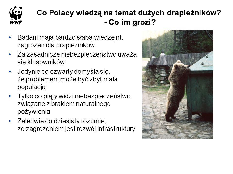 Co Polacy wiedzą na temat dużych drapieżników - Co im grozi