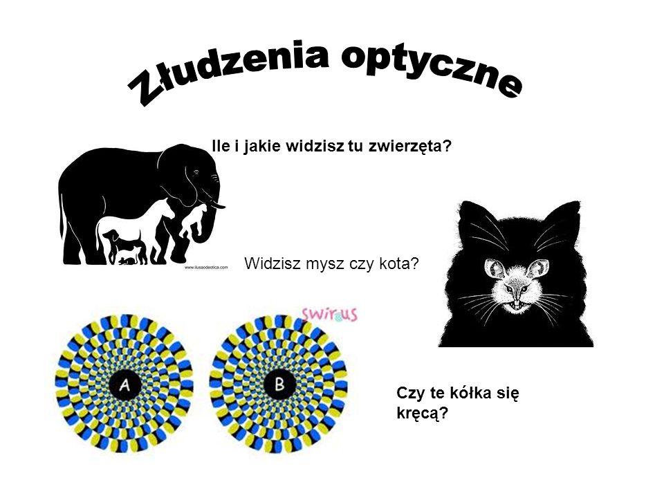 Złudzenia optyczne Ile i jakie widzisz tu zwierzęta
