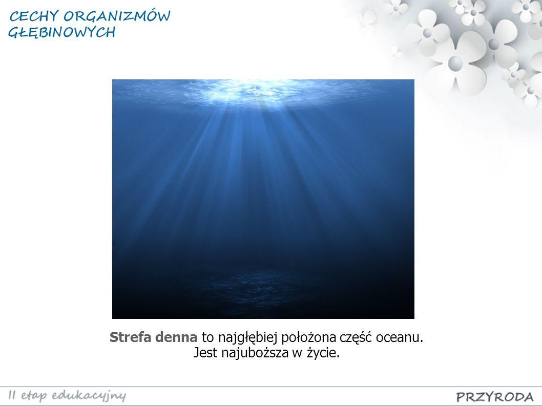 Strefa denna to najgłębiej położona część oceanu