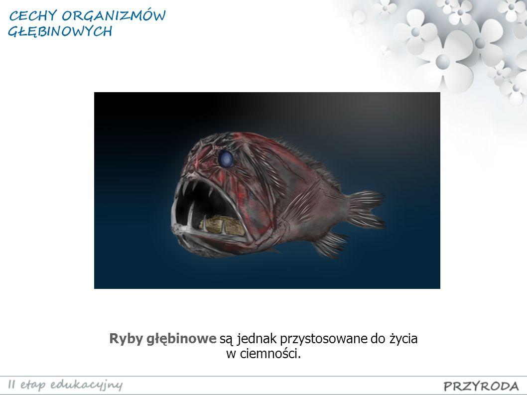 Ryby głębinowe są jednak przystosowane do życia