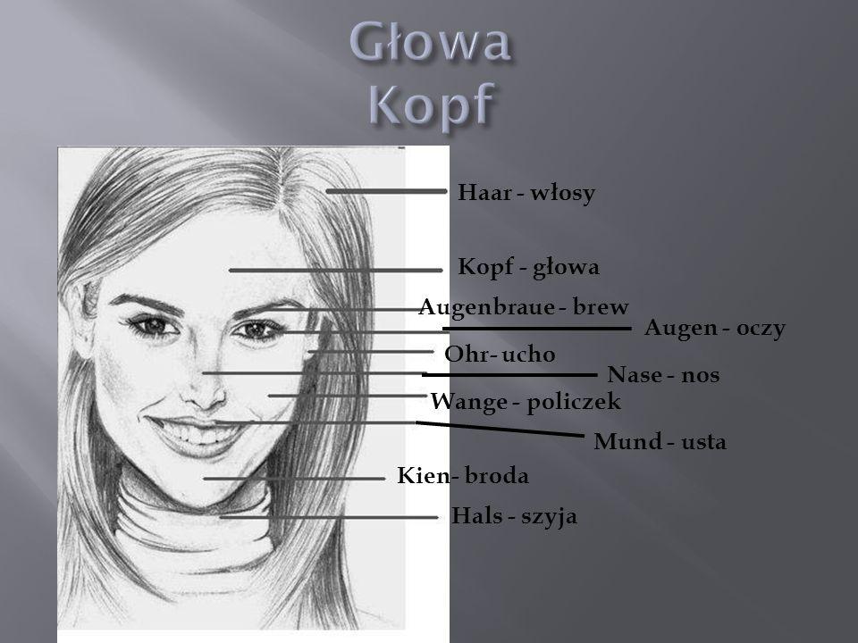 Głowa Kopf Haar - włosy Kopf - głowa Augenbraue - brew Augen - oczy