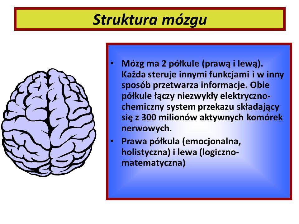 Struktura mózgu