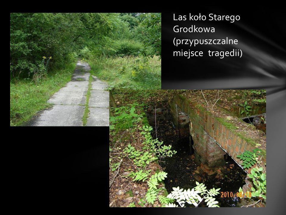 Las koło Starego Grodkowa (przypuszczalne miejsce tragedii)