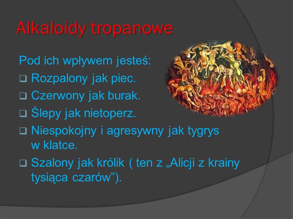 Alkaloidy tropanowe Pod ich wpływem jesteś: Rozpalony jak piec.
