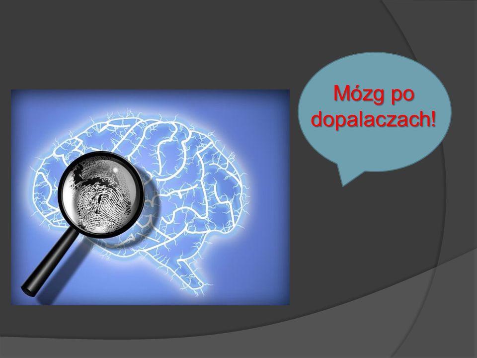 Mózg po dopalaczach!