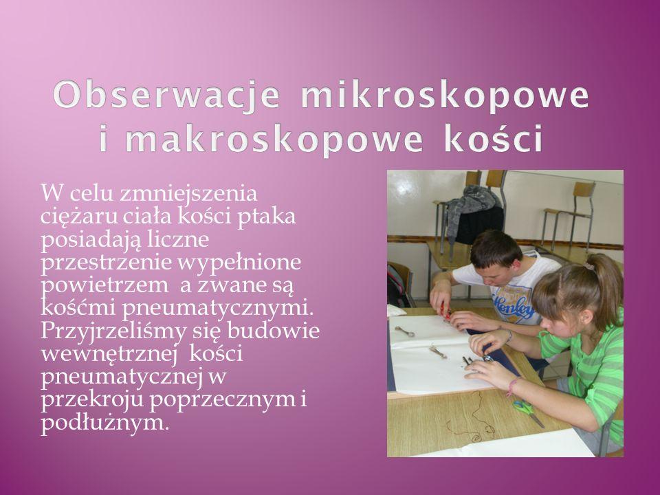 Obserwacje mikroskopowe i makroskopowe kości