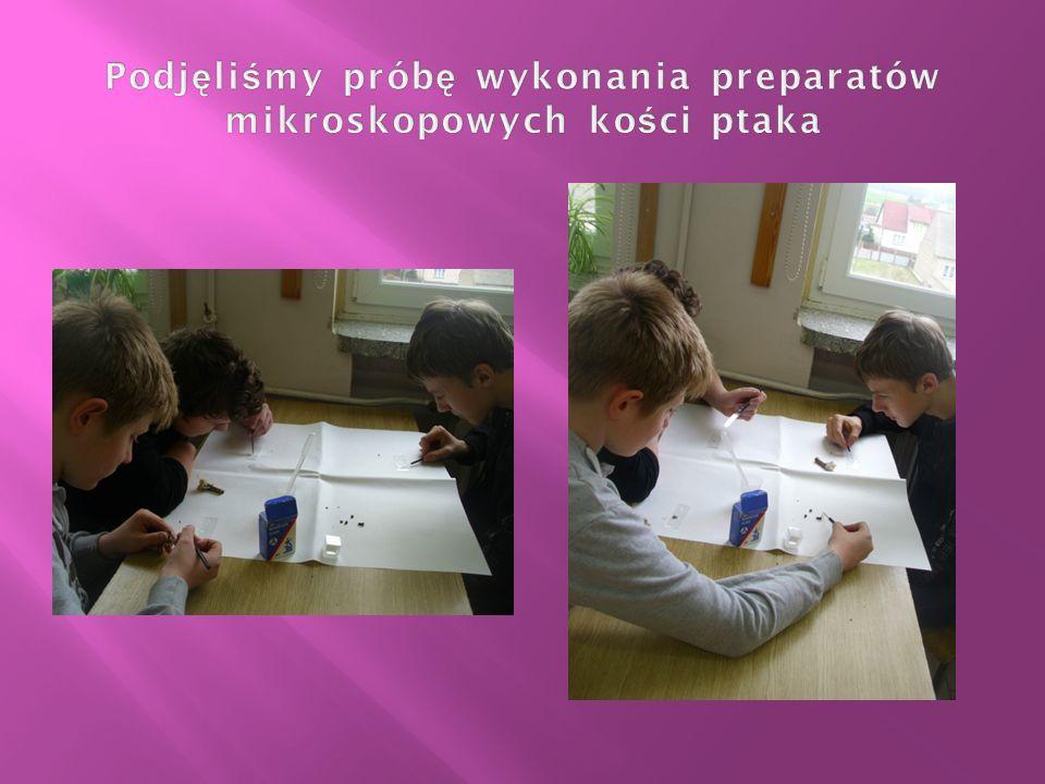 Podjęliśmy próbę wykonania preparatów mikroskopowych kości ptaka