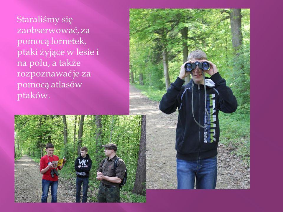Staraliśmy się zaobserwować, za pomocą lornetek, ptaki żyjące w lesie i na polu, a także rozpoznawać je za pomocą atlasów ptaków.