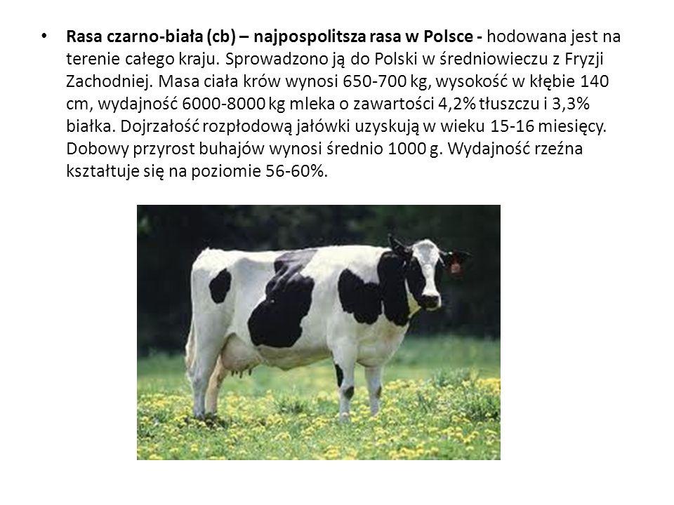 Rasa czarno-biała (cb) – najpospolitsza rasa w Polsce - hodowana jest na terenie całego kraju.