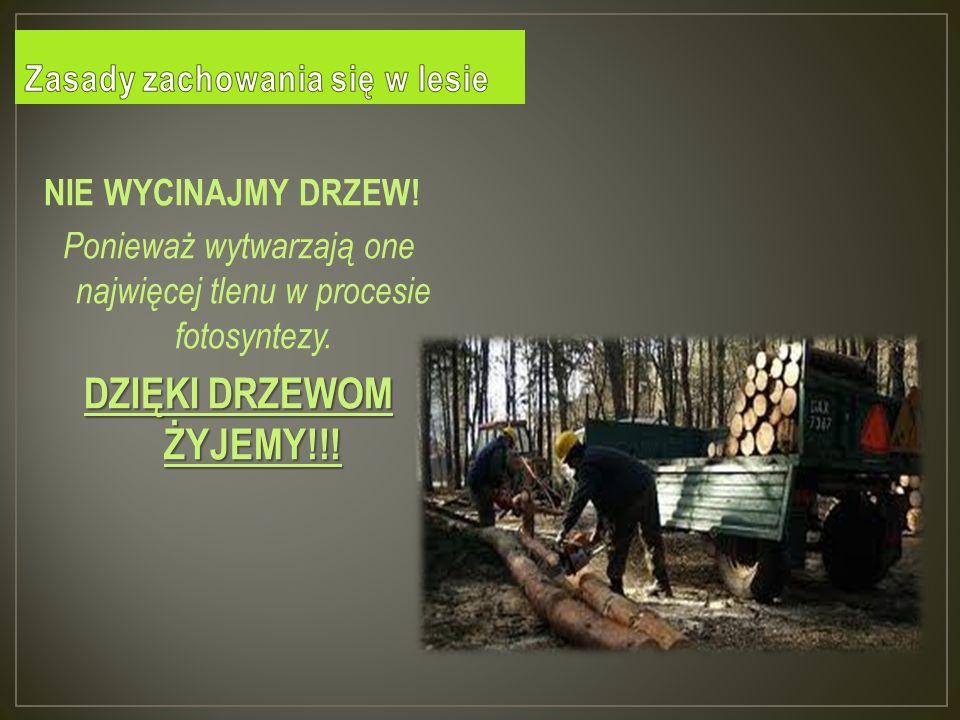 Zasady zachowania się w lesie