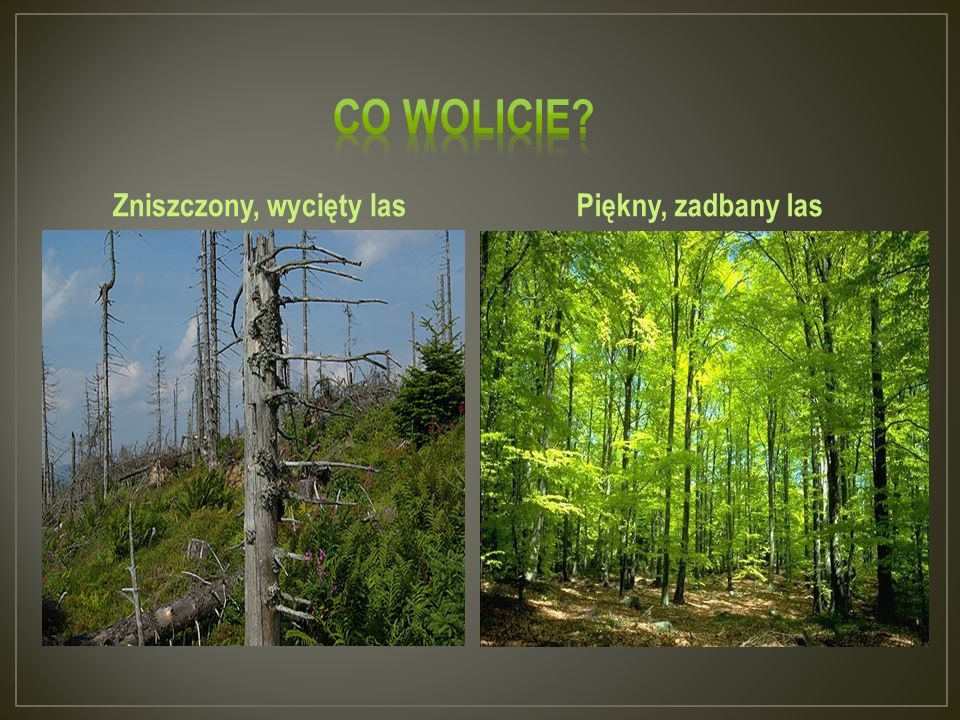 Zniszczony, wycięty las