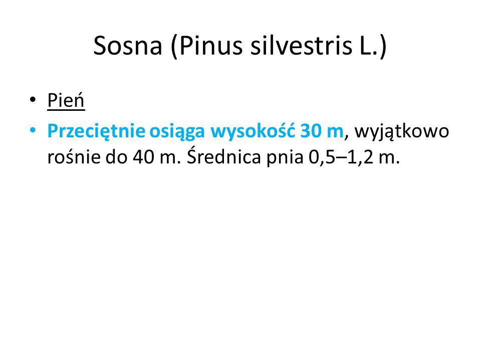 Sosna (Pinus silvestris L.)