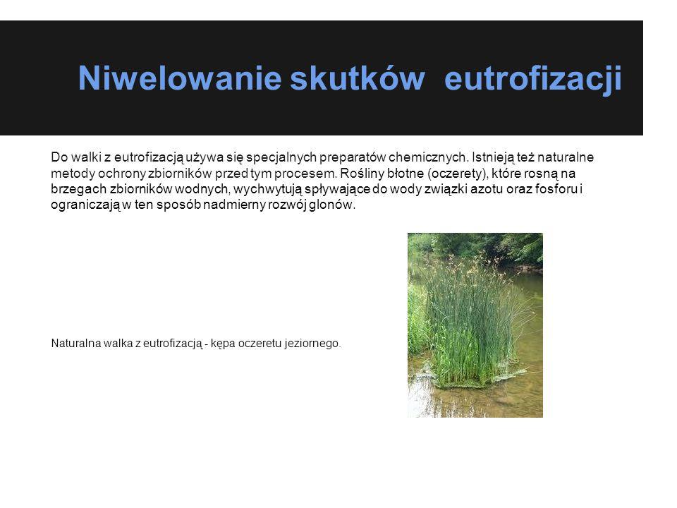 Niwelowanie skutków eutrofizacji