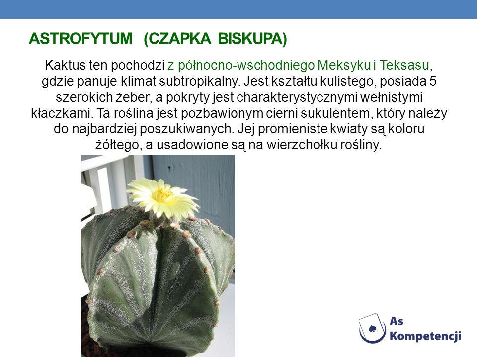Astrofytum (Czapka biskupa)