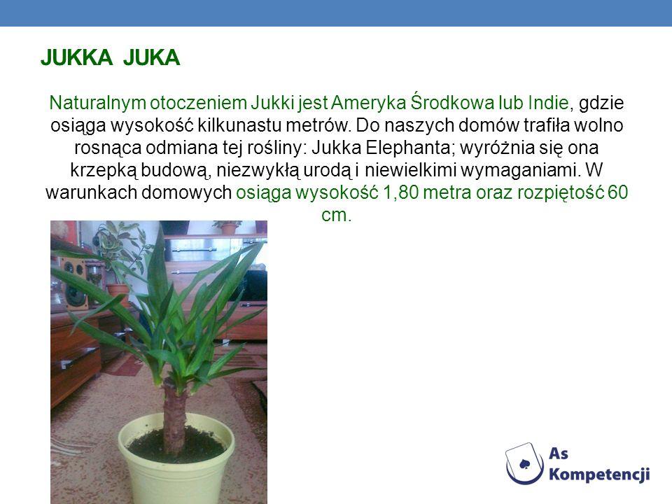 Jukka Juka