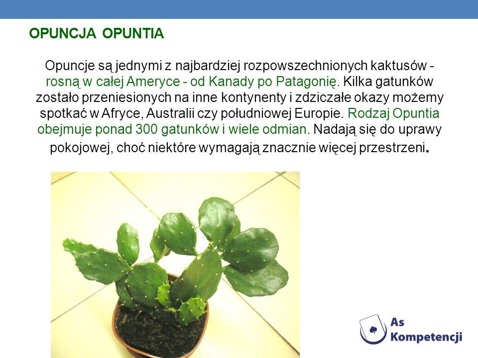 Opuncja Opuntia