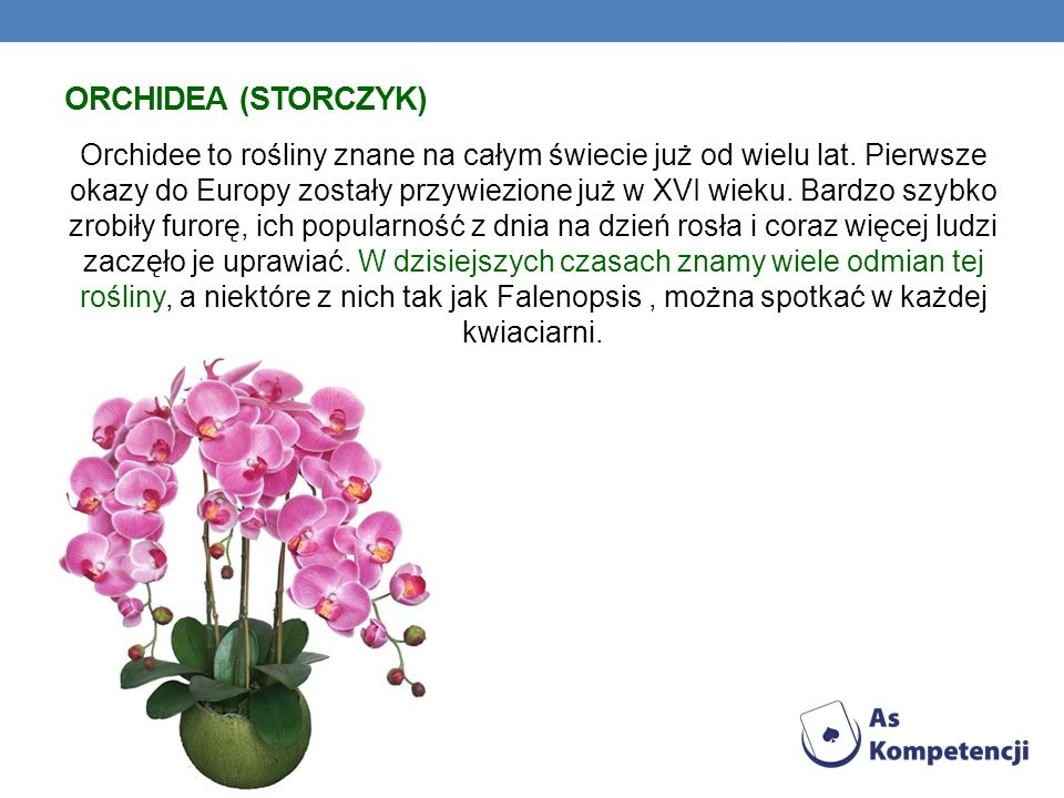 Orchidea (Storczyk)