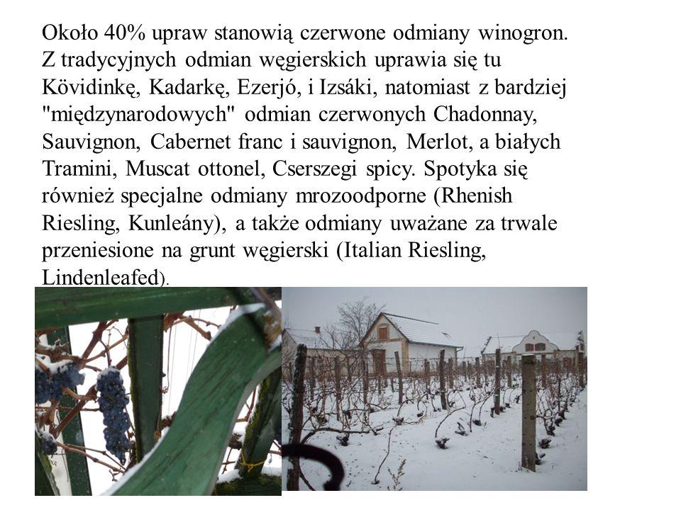 Około 40% upraw stanowią czerwone odmiany winogron