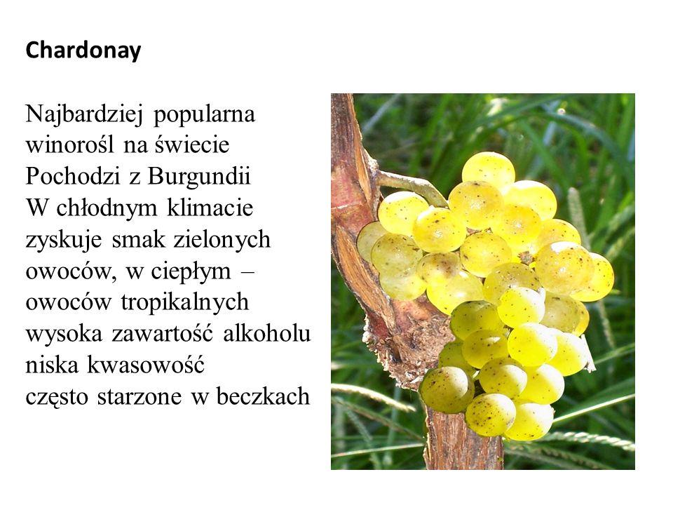 Chardonay Najbardziej popularna winorośl na świecie. Pochodzi z Burgundii.