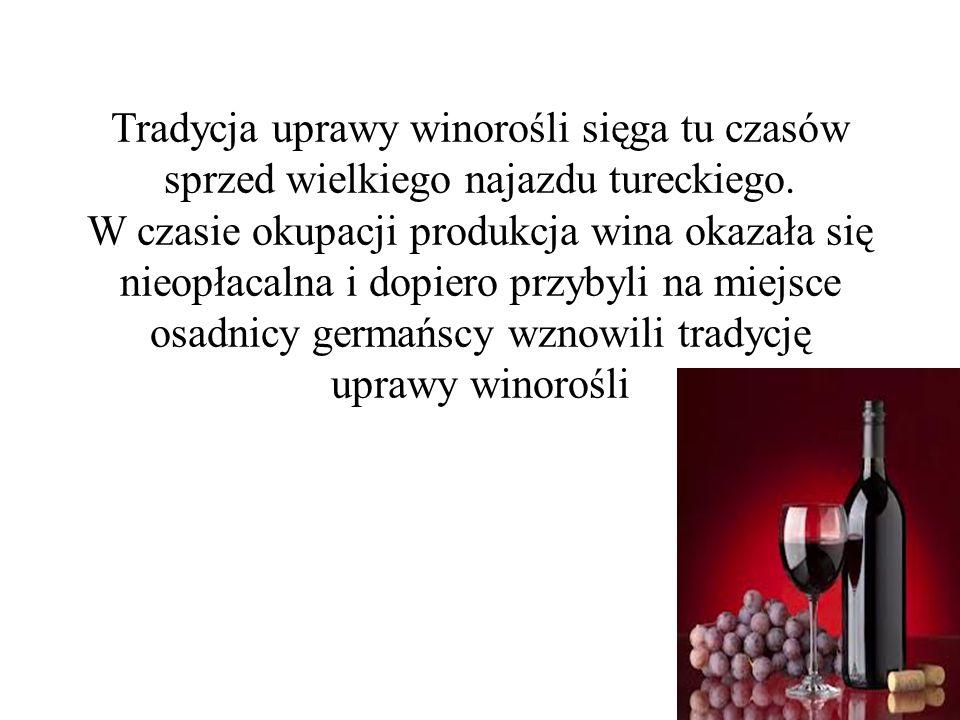 Tradycja uprawy winorośli sięga tu czasów sprzed wielkiego najazdu tureckiego.