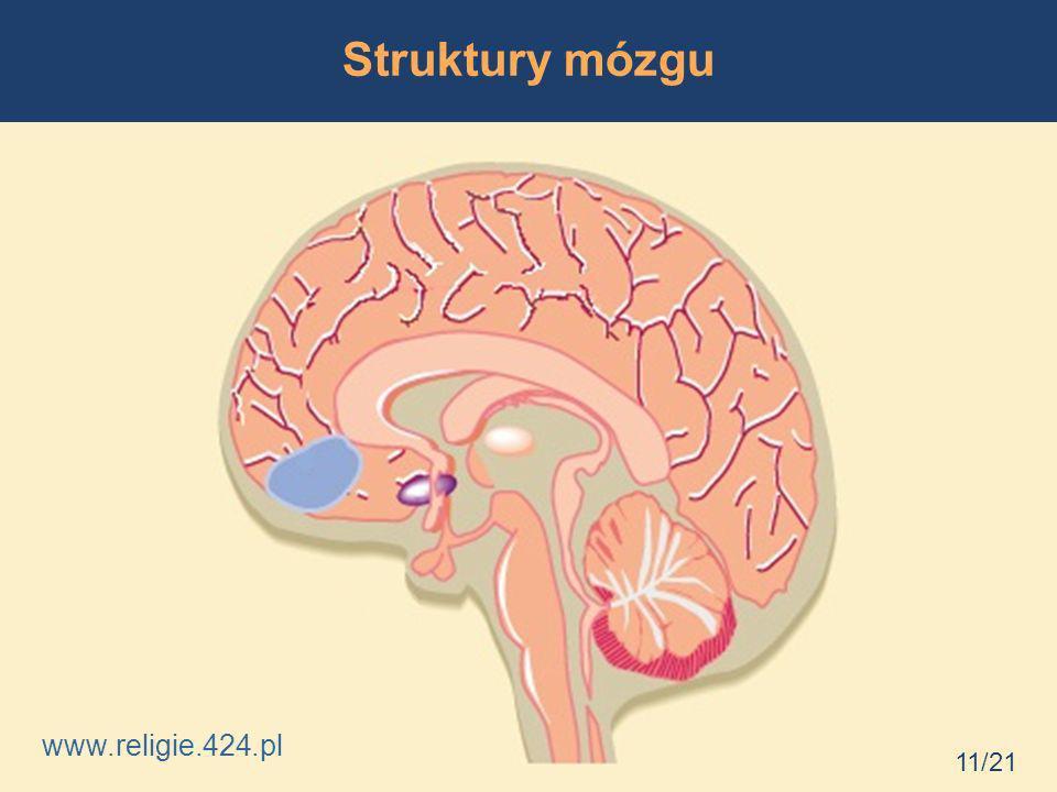 Struktury mózgu www.religie.424.pl 11/21