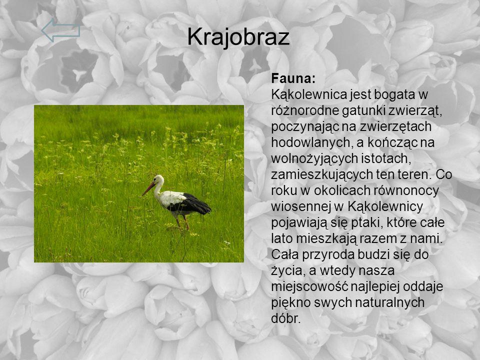 KrajobrazFauna: