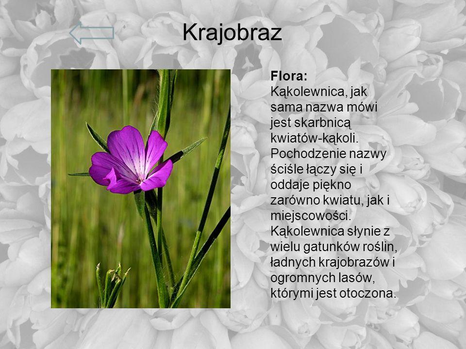 Krajobraz Flora: