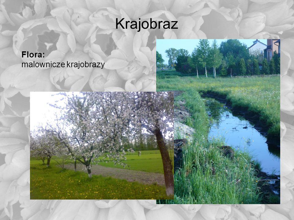 Krajobraz Flora: malownicze krajobrazy