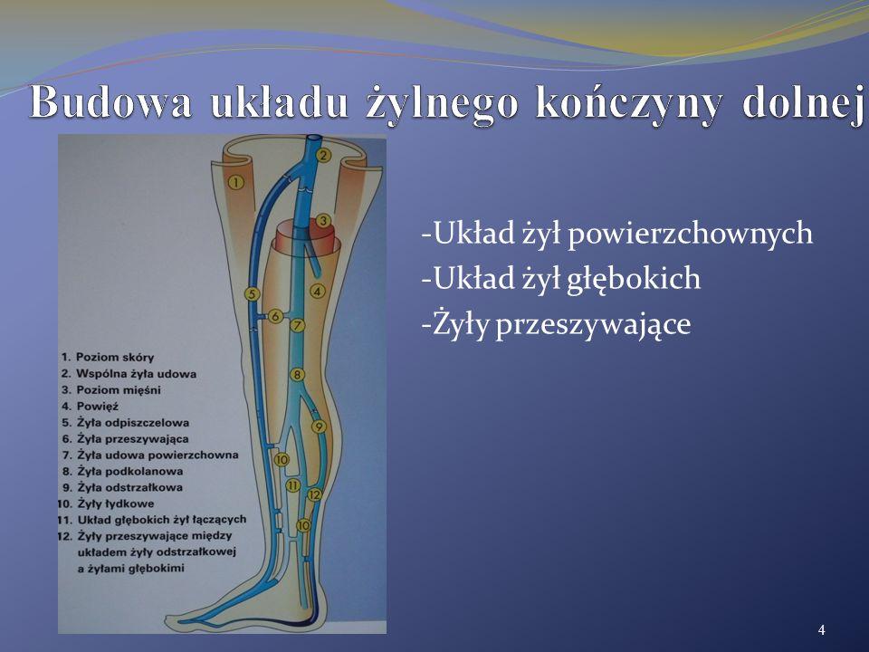 Budowa układu żylnego kończyny dolnej