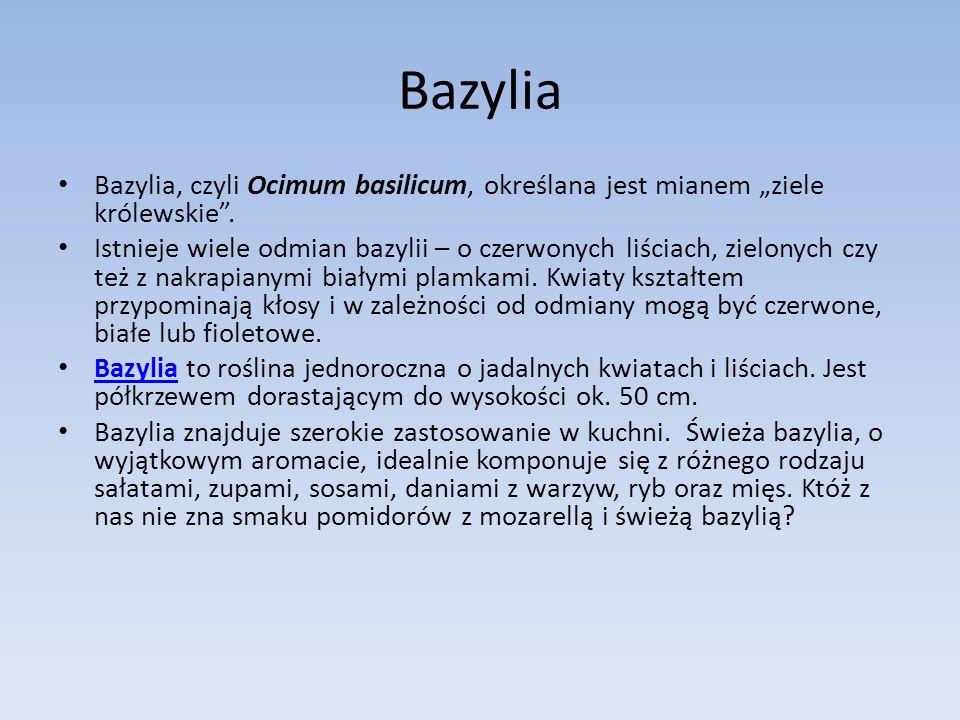 """Bazylia Bazylia, czyli Ocimum basilicum, określana jest mianem """"ziele królewskie ."""