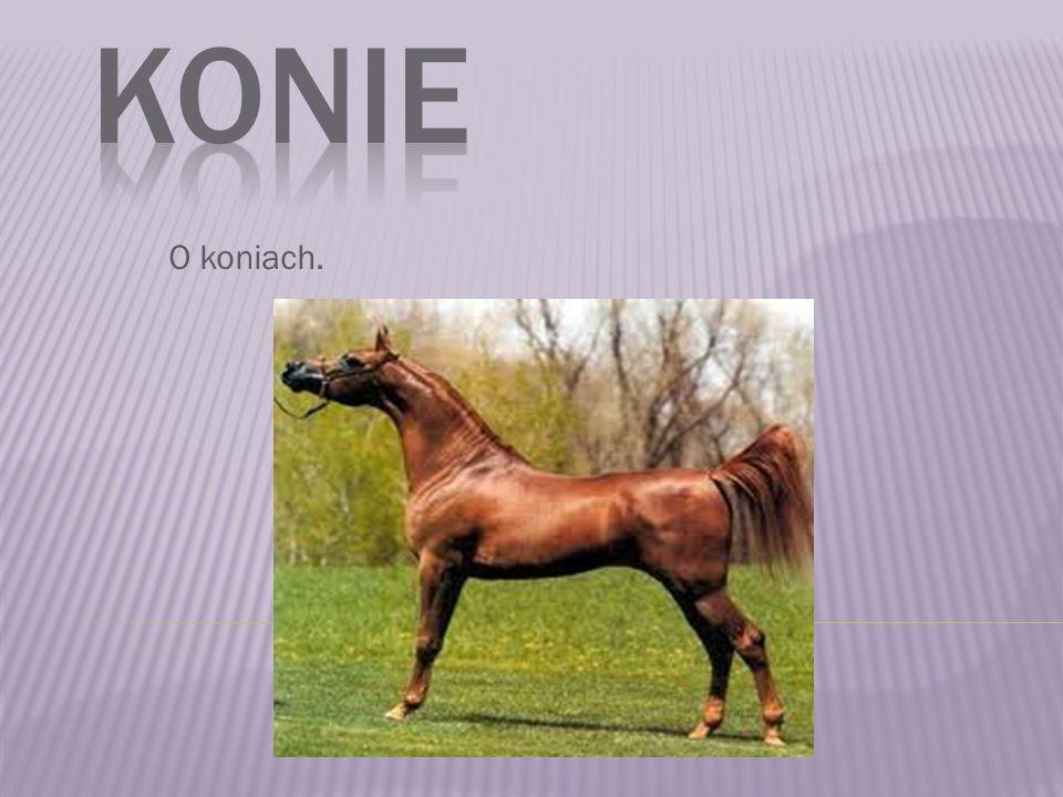 Konie O koniach.