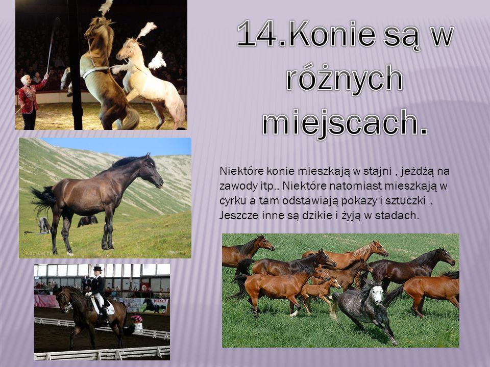 14.Konie są w różnych miejscach.