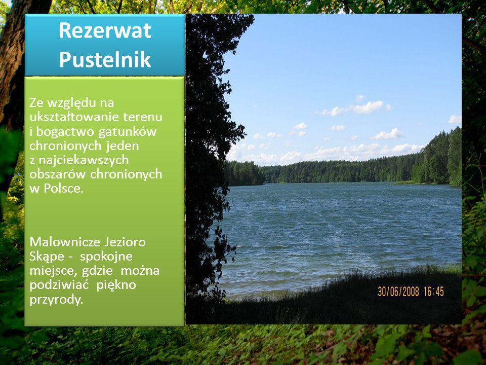 Rezerwat Pustelnik