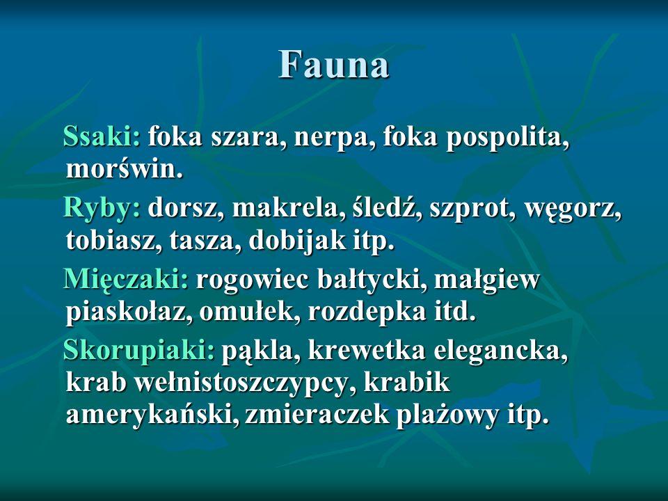 Fauna Ssaki: foka szara, nerpa, foka pospolita, morświn.