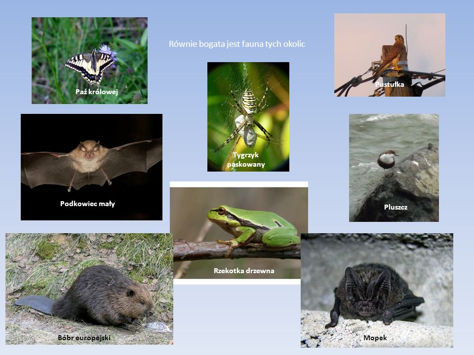 Równie bogata jest fauna tych okolic