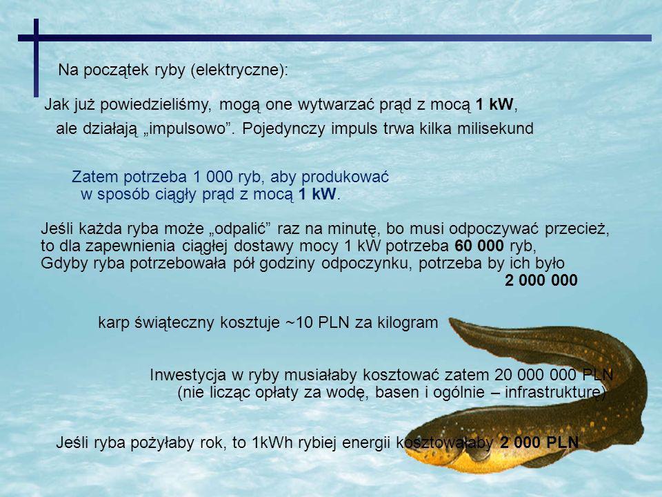 Na początek ryby (elektryczne):