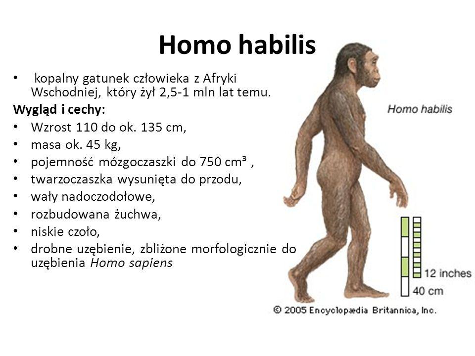 Homo habilis kopalny gatunek człowieka z Afryki Wschodniej, który żył 2,5-1 mln lat temu. Wygląd i cechy: