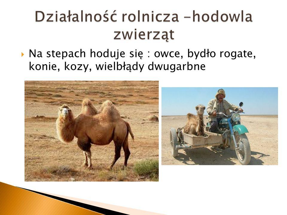 Działalność rolnicza -hodowla zwierząt