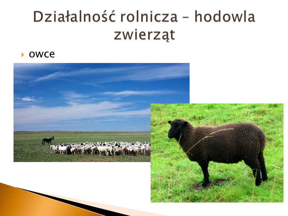 Działalność rolnicza – hodowla zwierząt