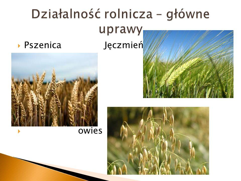 Działalność rolnicza – główne uprawy